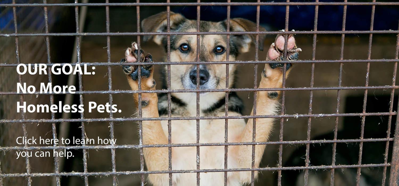 Bristol Humane Society Margaret B  Mitchell Spay / Neuter